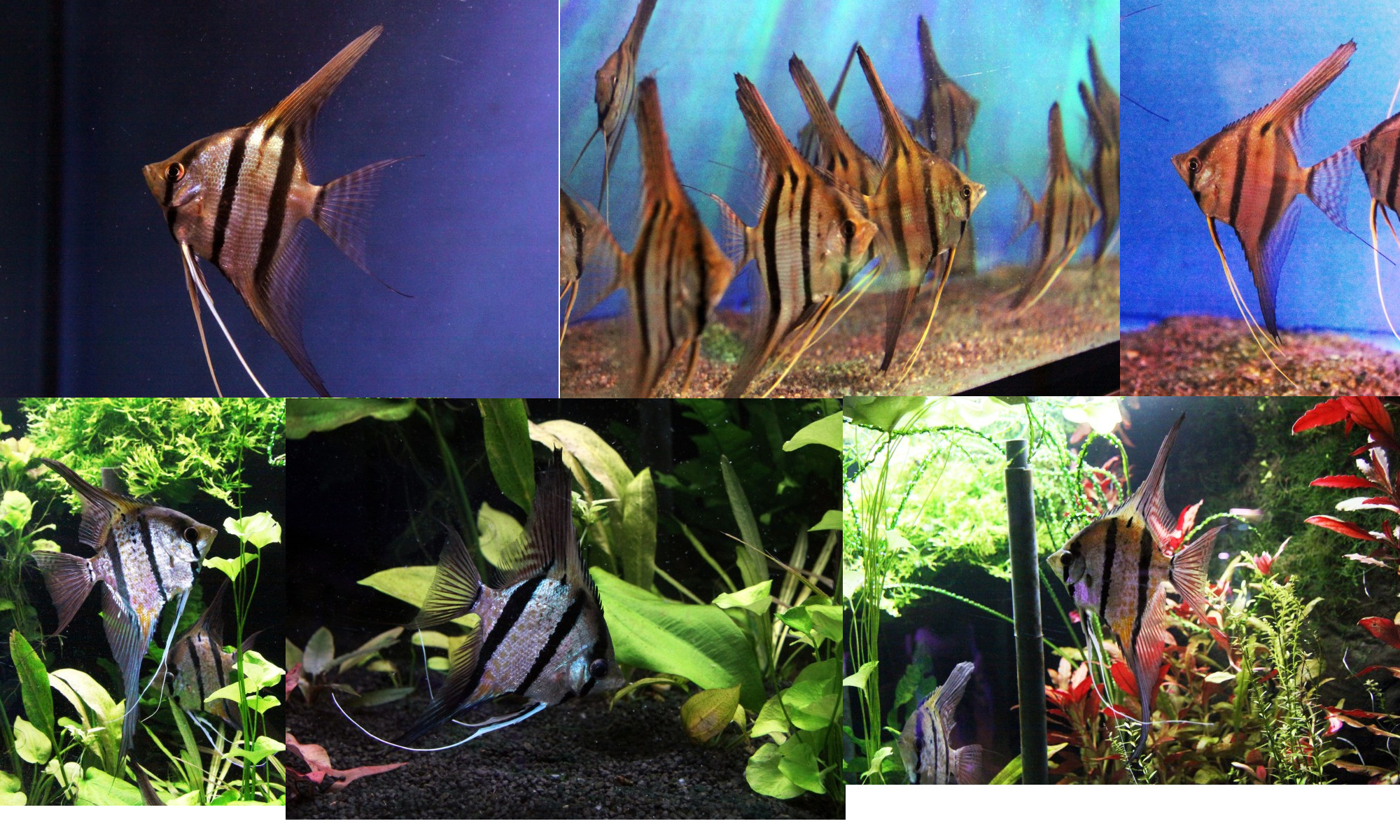 unsere Fische